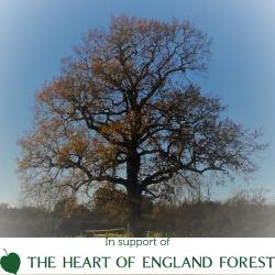 Forest Marathon 2020